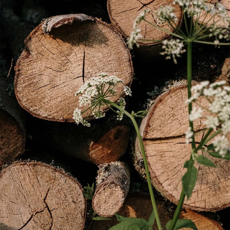 close up of cut logs with white flowers in front of them